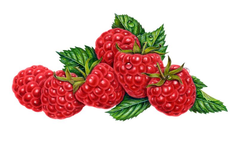 Raspberry Images