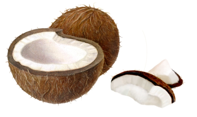 Coconut samples