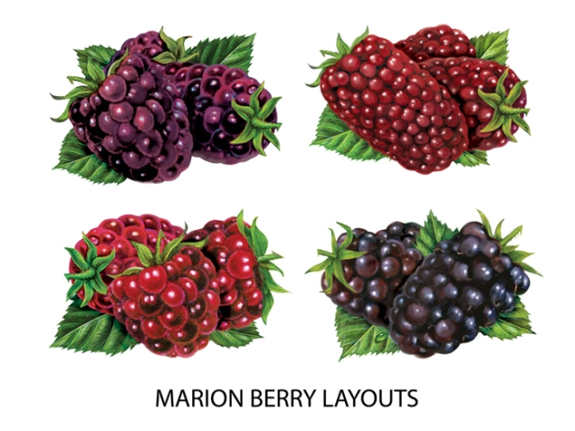 Marion Berry Layouts