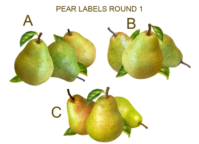 "My pear layouts show how the chosen ""C"" layout"" had more consistent shadows on the final illustration. The leaf on the bottom left was also eliminated."